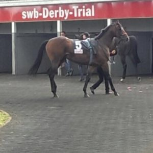 El Tren does it again for Stable 24, beating a competitive field in this Conditions race