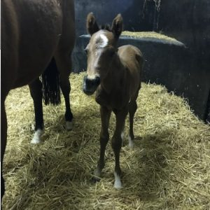 First Foal of the Year for the Gute Freunde Partnership.
