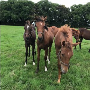 Weaning Time for Global Equine Group Foals.