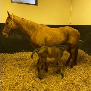 First Foal of 2021